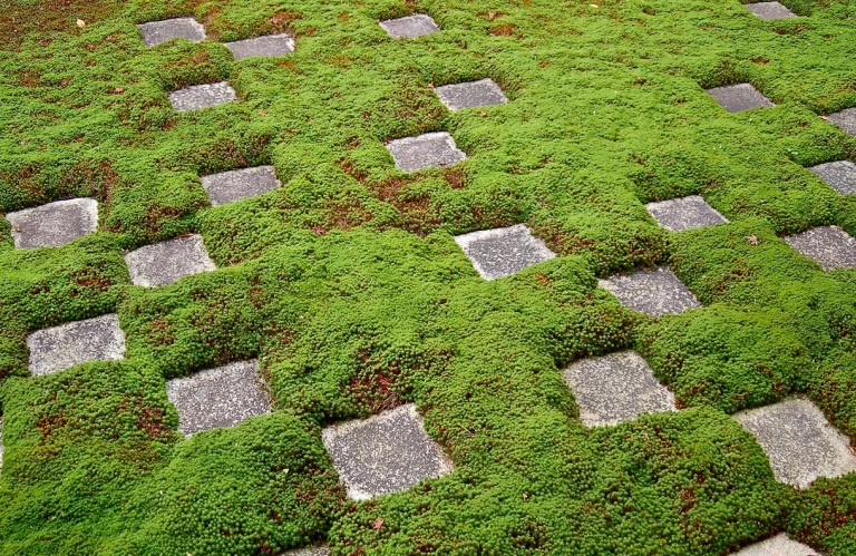 moss-garden-square-pattern-7